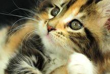 Cat Luv =.=