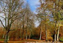 Jardins, parcs et espaces naturels / Les plus belles photos des jardins, de tous les jardins...