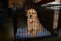 Puppy love / by Melissa Tony Stires