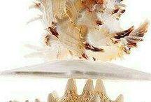Perles de Coquillage