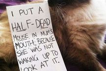 Top 10 Cat Shaming Pictures