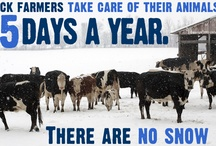 Farmers Care About their Animals / Learn how farmers take great care for their animals. / by American Farm Bureau Federation