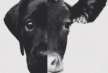 Vegetarian life ❤☮️☯️