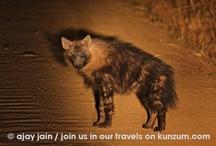 Wildlife / by Kunzum #wetravel