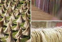 From flax to linen