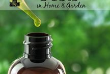 Oils for outdoors / by Cindy Peden
