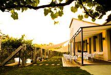 Nuestra Wine Bar / Durante los meses de verano abrimos nuestro wine-bar. Ubicada en el entorno de nuestra bodega, la terraza se llena cada fin de semana para recibir a todos aquellos que quieran degustar nuestro vino, acompañado de un pincho, de muy buena compañía y de un entorno privilegiado.