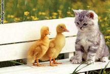 Here Kitty, Kitty...