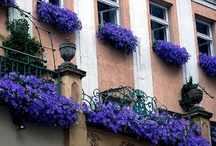 Window Boxes Are Cool! / by Sheryl Turner