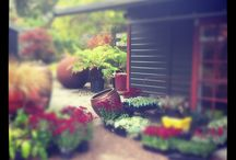 Dig Nursery Shop / A destination plant nursery,  shop and guest suite on Vashon Island WA.