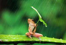 17 Frogs- Kikkers