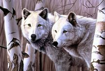 Wolves and Coyotes / Photos of wolves and coyotes and art inspired by their beauty.