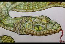 Ayahuasca Jungle Vision