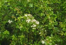 British Flora and Fauna
