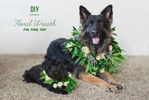 wedding pets / how can you forget your pets on a day like your wedding? / by Green Wedding Shoes