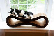 Cat Love / by Renee Kohlman