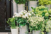 FlowerPassion