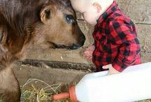 The farm life / by Sharla Smith