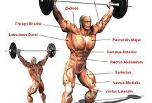 筋肉解剖図