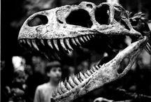 Preschool Science: Dinosaur