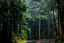 ağaç tüneli + yol