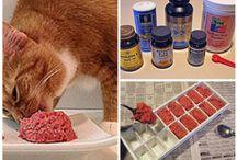 cat food diet