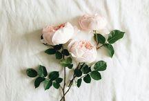 Inspirations - botanical