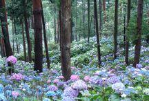 Landscape Gardening Stuff