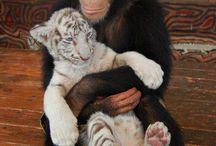 Maimuțelor mame