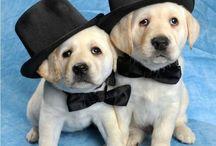 Pups / Super cute