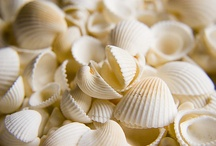 Seashells / Sally loves Seashells by the Seashore!