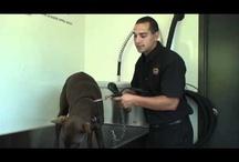 Lave-chien / Nous avons un lave-chien situé à notre succursale de Ste-Thérèse.