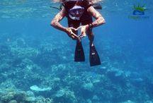 Karimunjawa underwater world / See the magnificent and magical underwater world of Karimunjawa island.