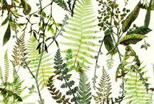 Herbal prints