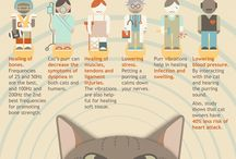 Did You Know This About Cats?