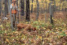 caccia passione