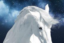 öy hevonen