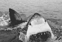 I LOVE SHARKS!