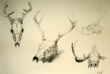 Deer / by Janalene Grassa