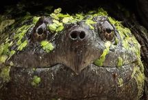 Turtles. Terrapin and tortoise oh my / by RJ Rico Suave