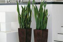 Plantas de exterior sin mantenimiento