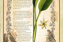 Bärlauch und andere Wildkräuter / Rezepte mit Bärlauch