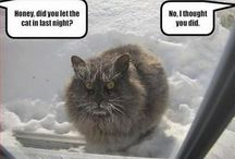Funnyxcats / If it makes my laughterlines worthwhile and/or there's cats involved - it's here.