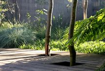 Australian Landscape Designers / Australia is home to many world class landscape designers. We have featured some of their landscapes here, particularly those that incorporate Australian Grasses and Strappy Leaf Plants in their designs.