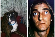Dogs who look like stars / Have you ever seen a dog who reminds you of a movie star?