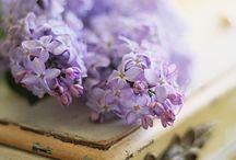 * Bzy, hortensje, glicynie ... | lilacs, hydrangeas, wisterias ... *