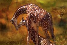 #Giraffe / The animal with the largest heart walking the earth. .