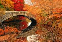 Seasons / Autumn