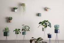 plants & accessories