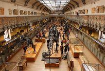 Galerie de paléontologie, Jardind es Plantes, Paris